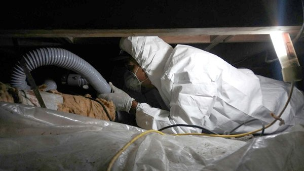 fort worth mold removal