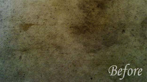 carpet cleaning in denton tx