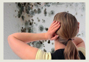 Mold Removal or Remediation
